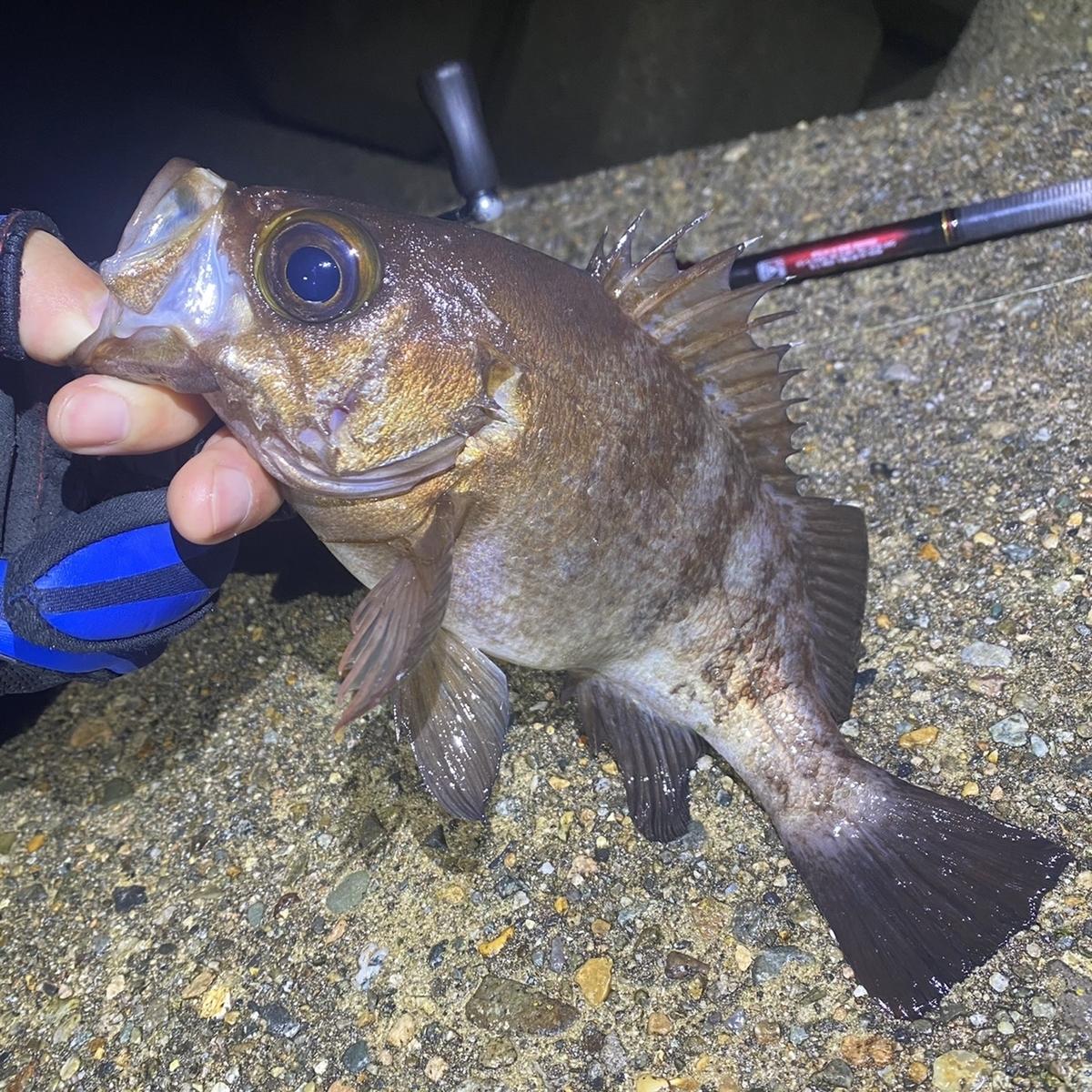 f:id:yu-kin-fishing:20201211112018j:plain