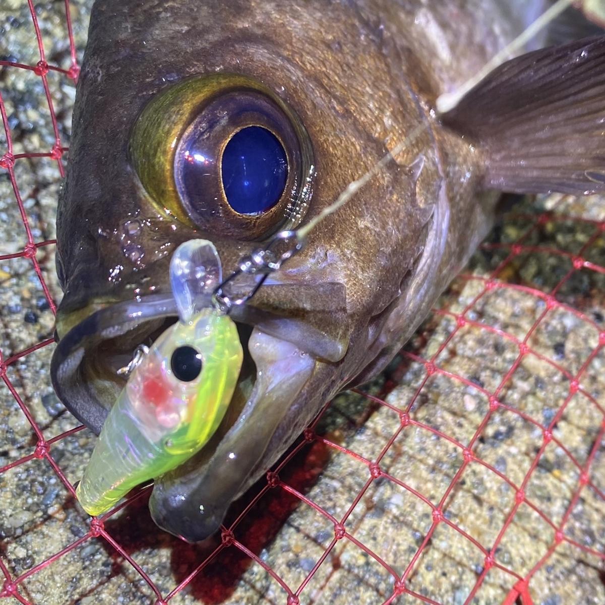f:id:yu-kin-fishing:20201211112044j:plain