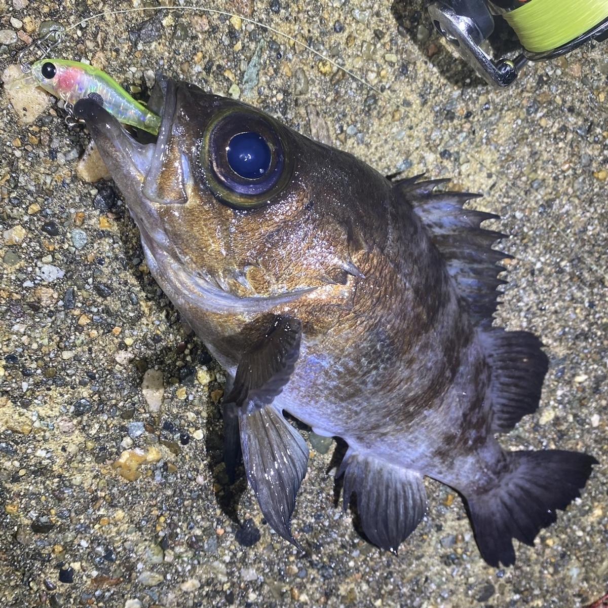 f:id:yu-kin-fishing:20201211112107j:plain