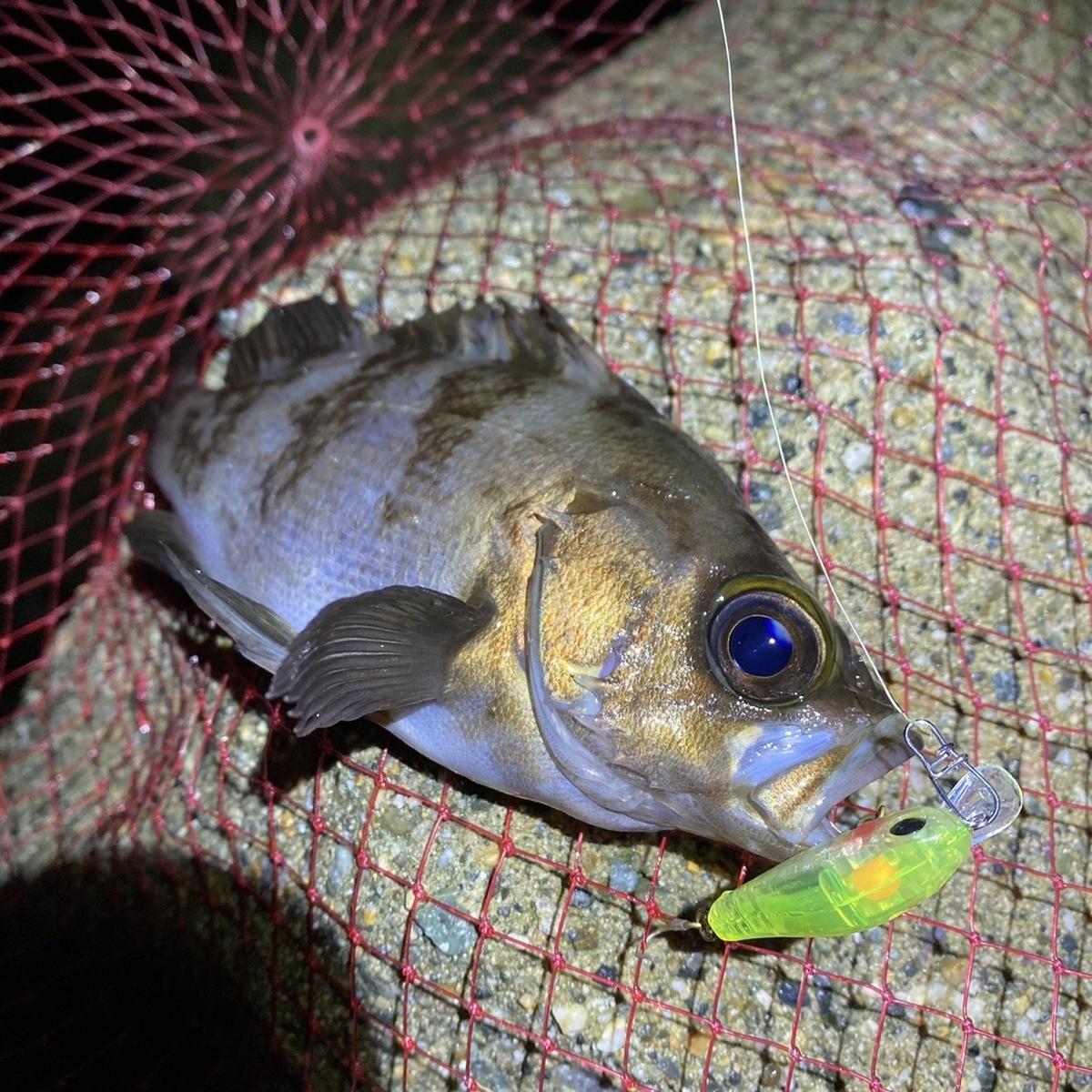 f:id:yu-kin-fishing:20201215114748j:plain