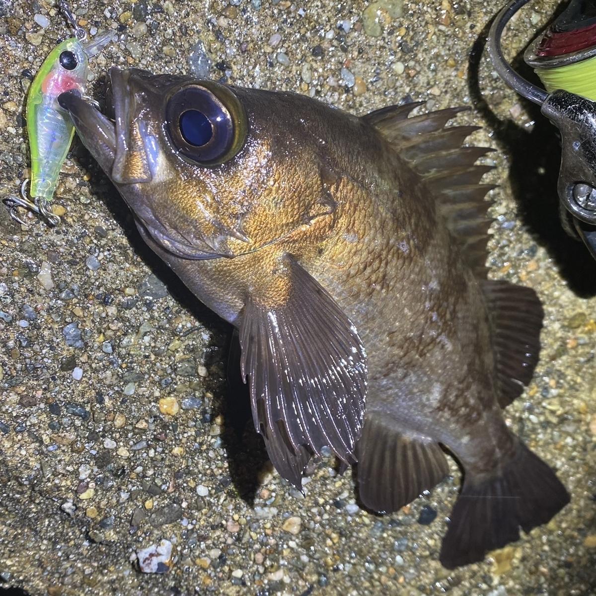 f:id:yu-kin-fishing:20201215114757j:plain