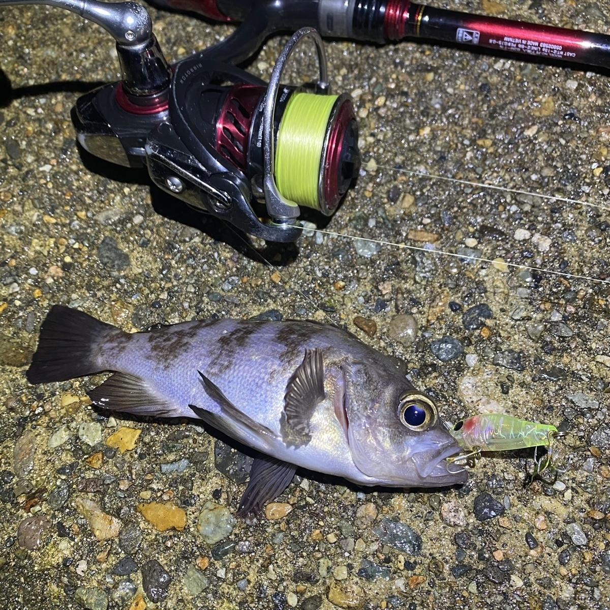 f:id:yu-kin-fishing:20201221093850j:plain