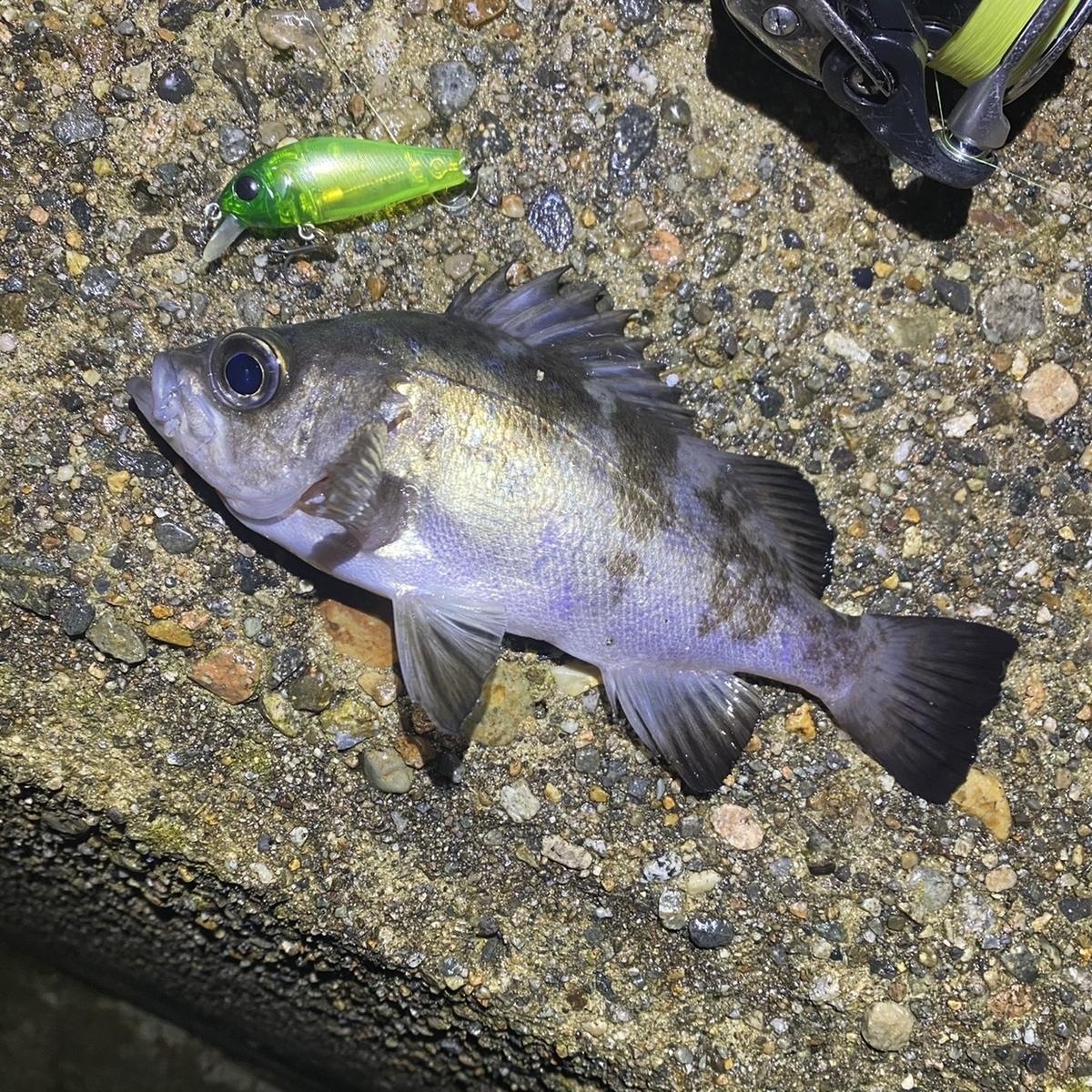 f:id:yu-kin-fishing:20201221093902j:plain