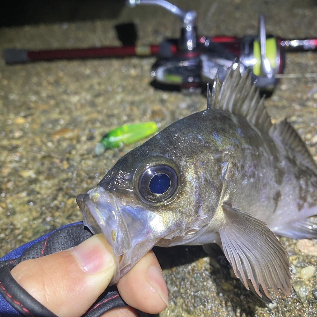 f:id:yu-kin-fishing:20201221093907j:plain
