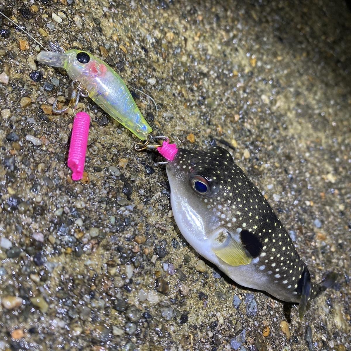 f:id:yu-kin-fishing:20201227104542j:plain
