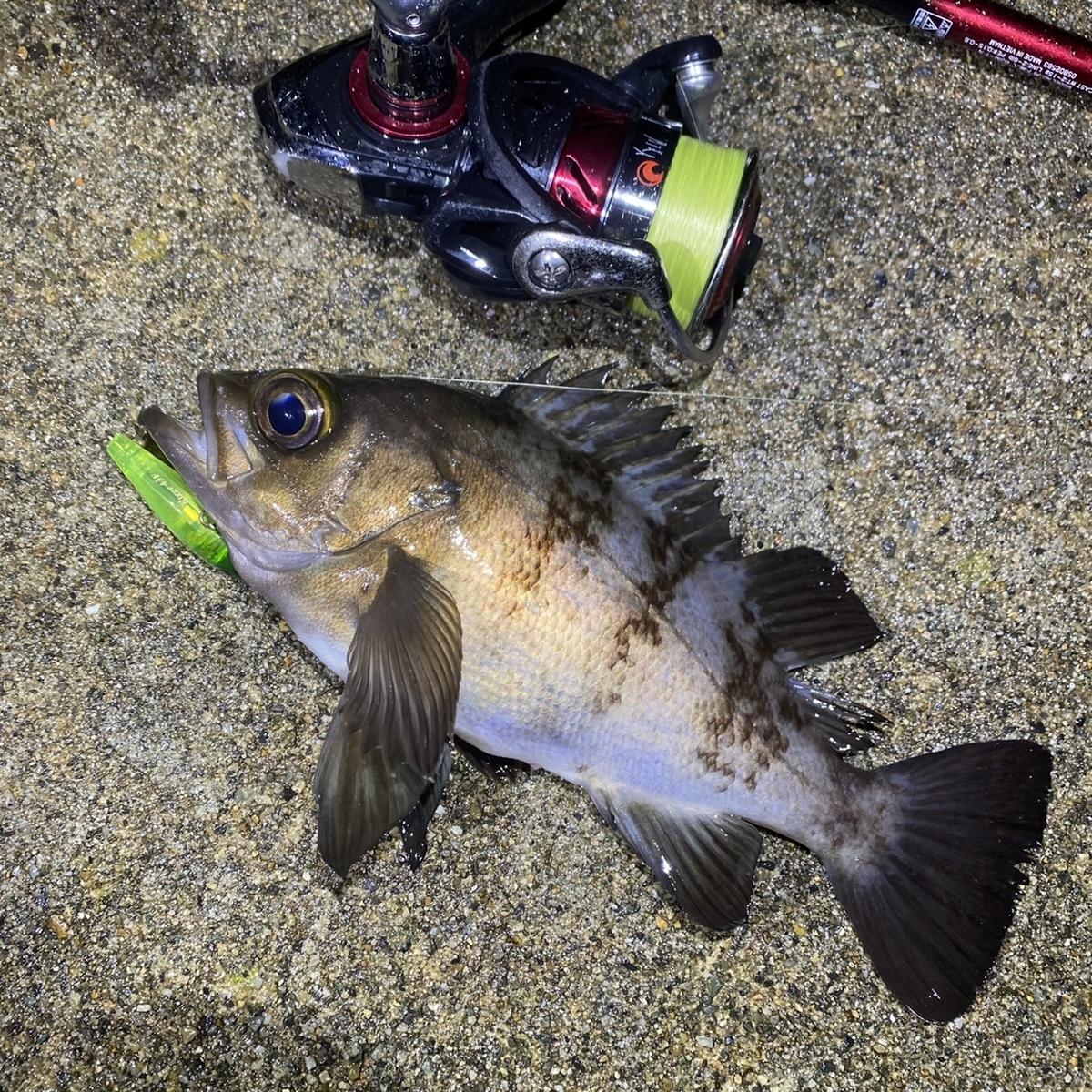f:id:yu-kin-fishing:20201227104555j:plain