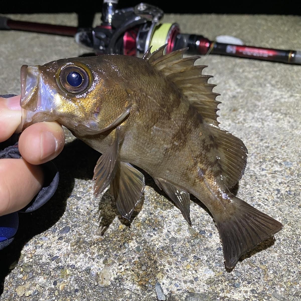 f:id:yu-kin-fishing:20201230105119j:plain