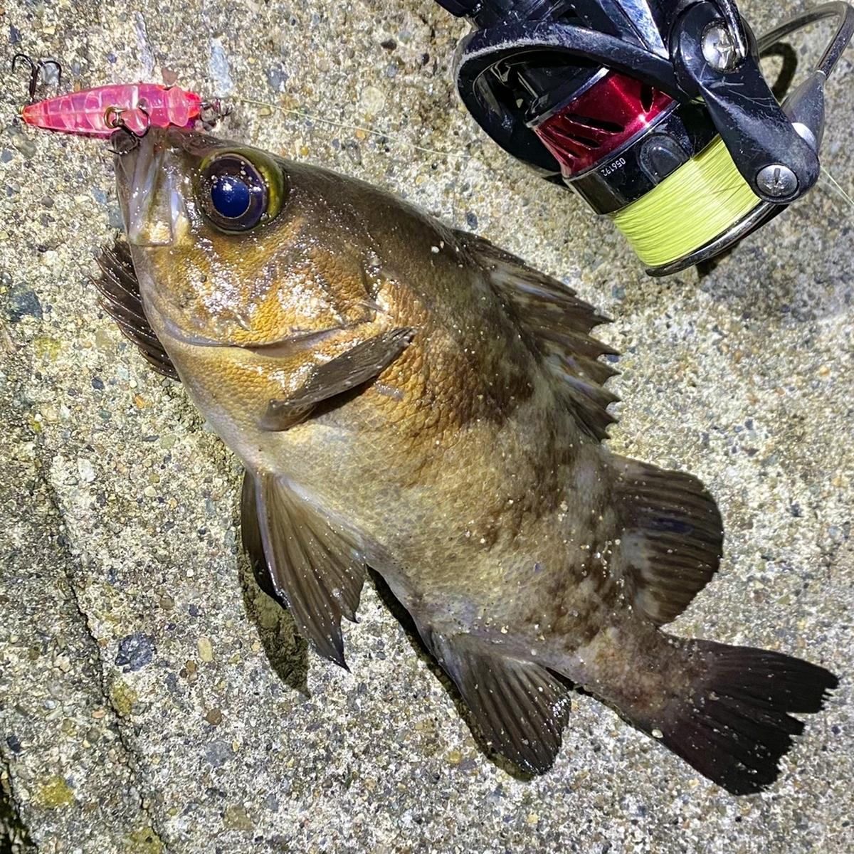 f:id:yu-kin-fishing:20201230105125j:plain