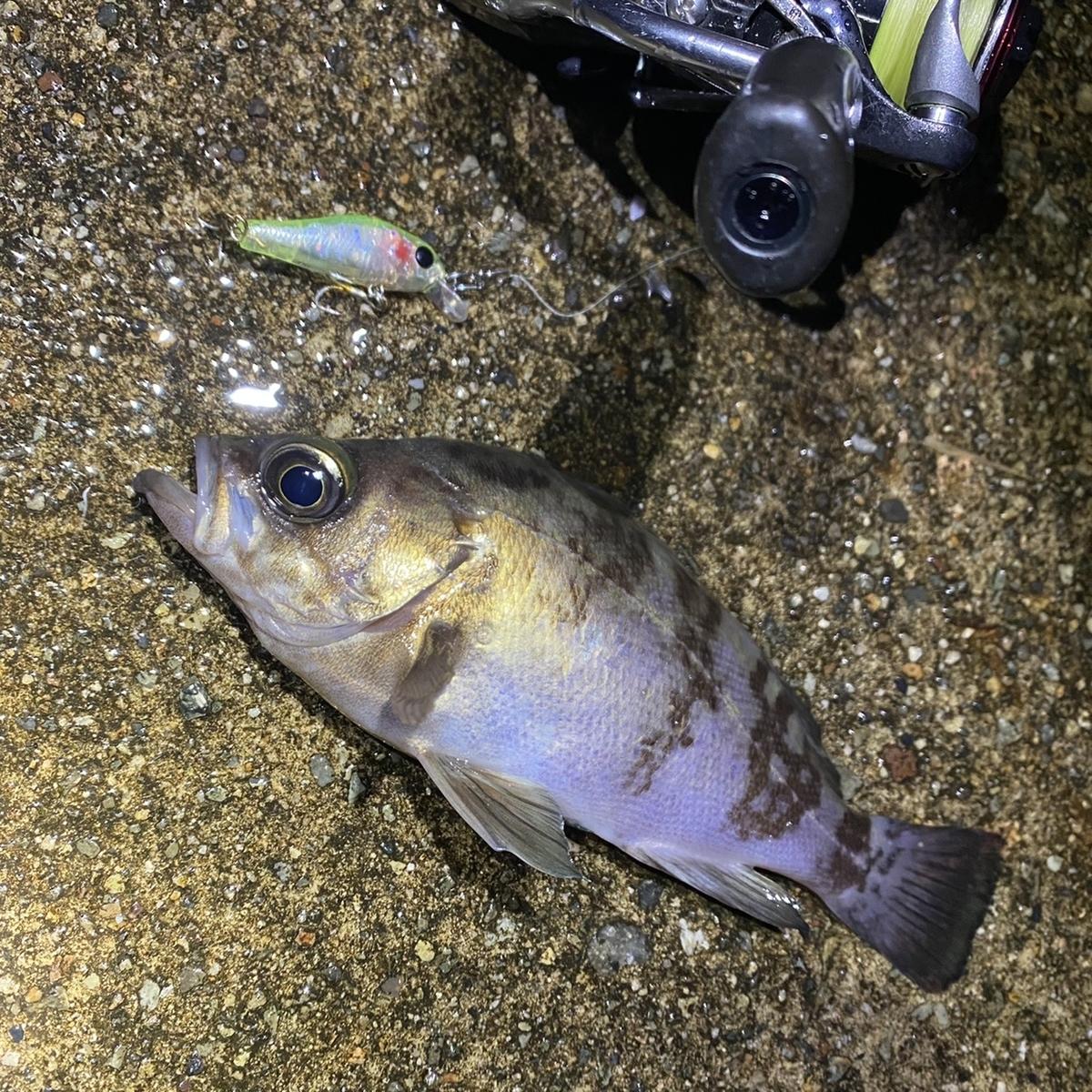 f:id:yu-kin-fishing:20210105175720j:plain