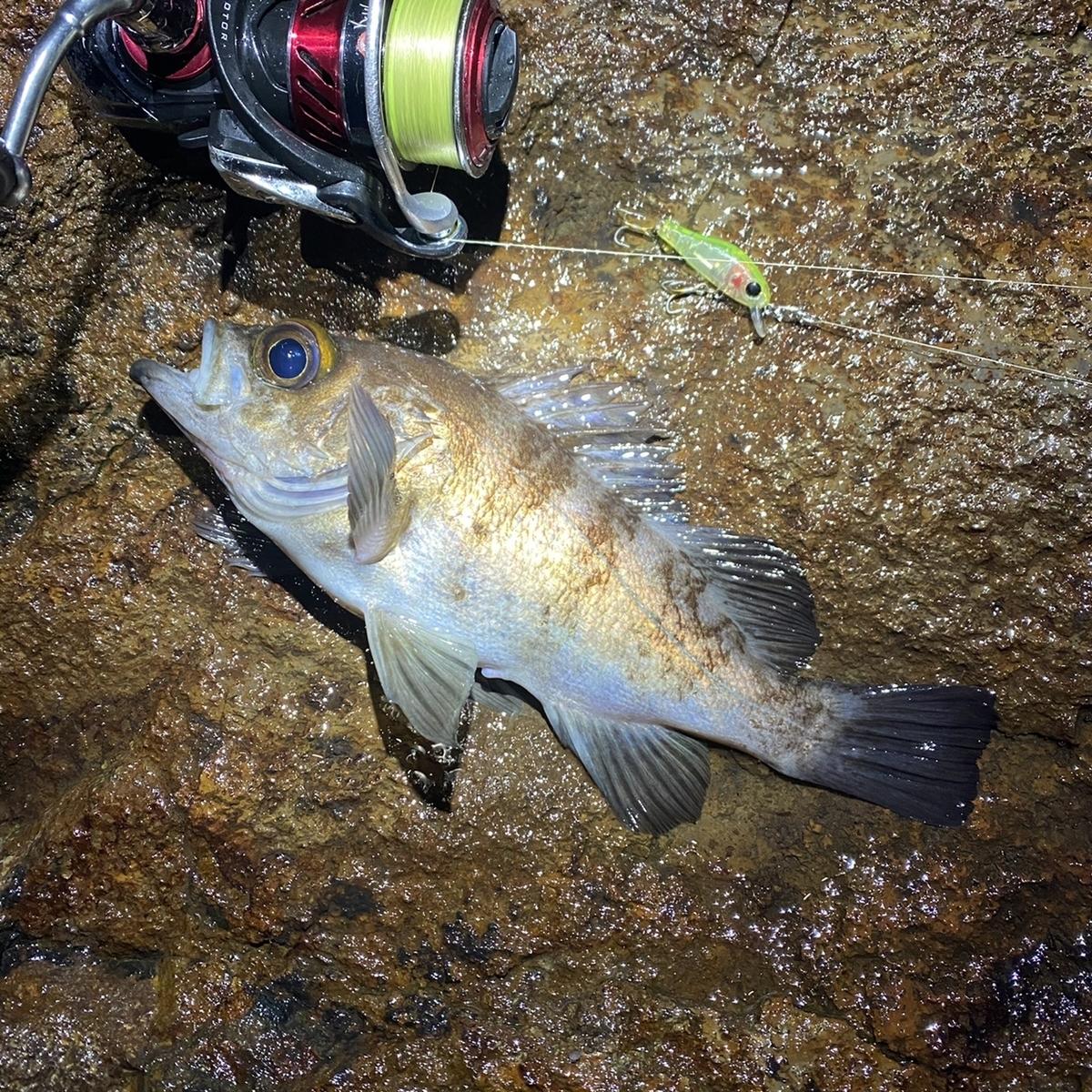 f:id:yu-kin-fishing:20210105175834j:plain