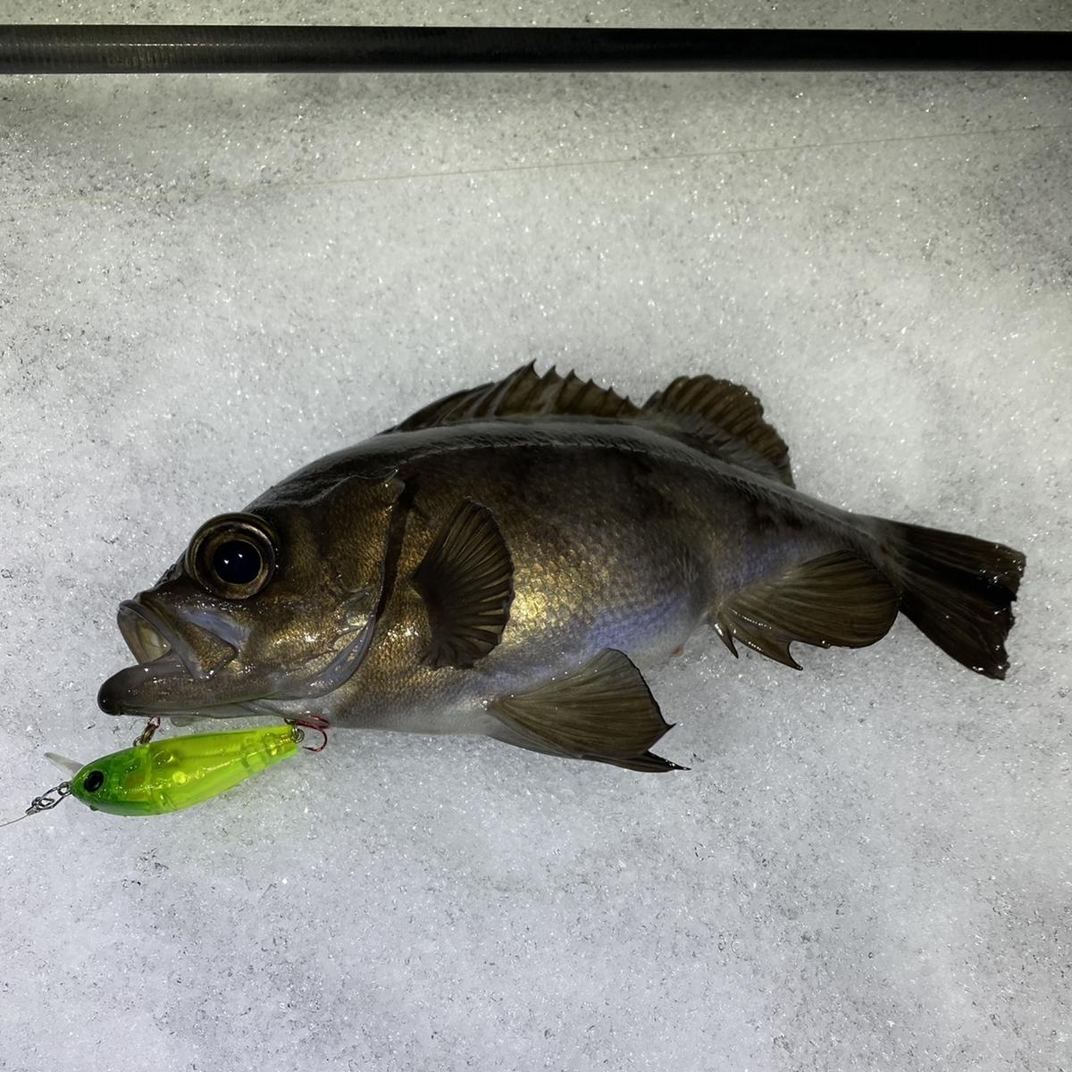 f:id:yu-kin-fishing:20210114123900j:plain