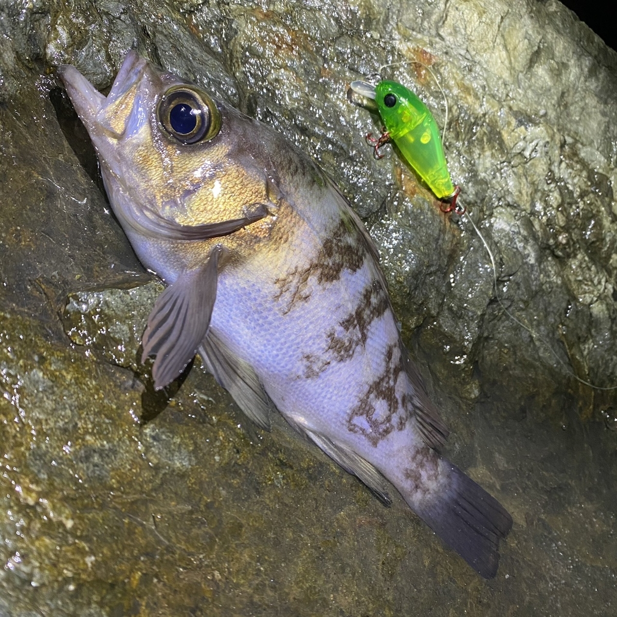 f:id:yu-kin-fishing:20210114123904j:plain