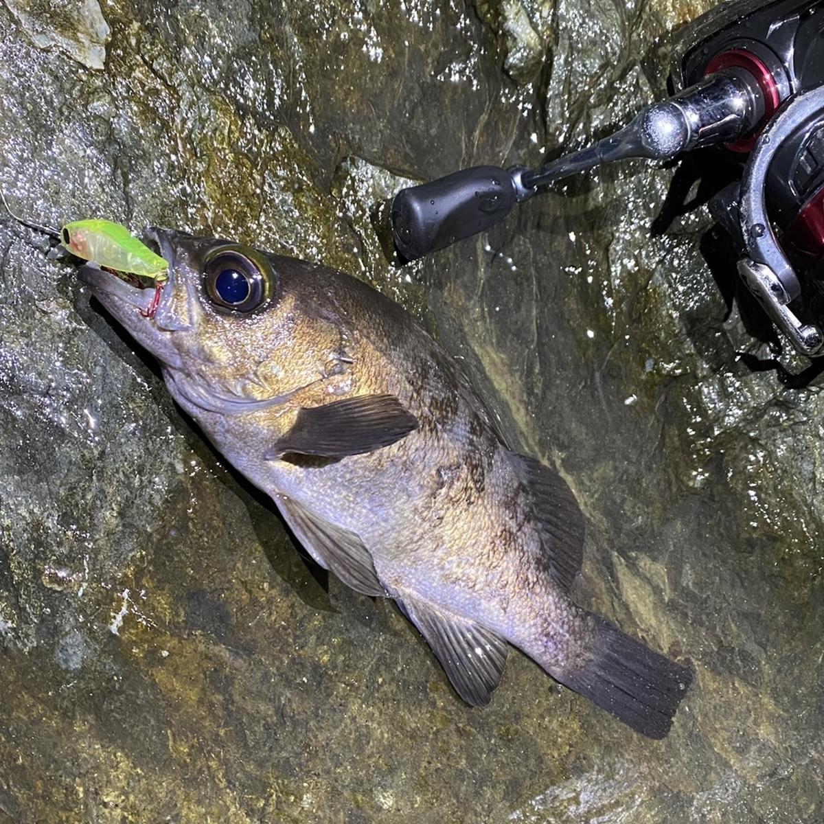 f:id:yu-kin-fishing:20210114123913j:plain