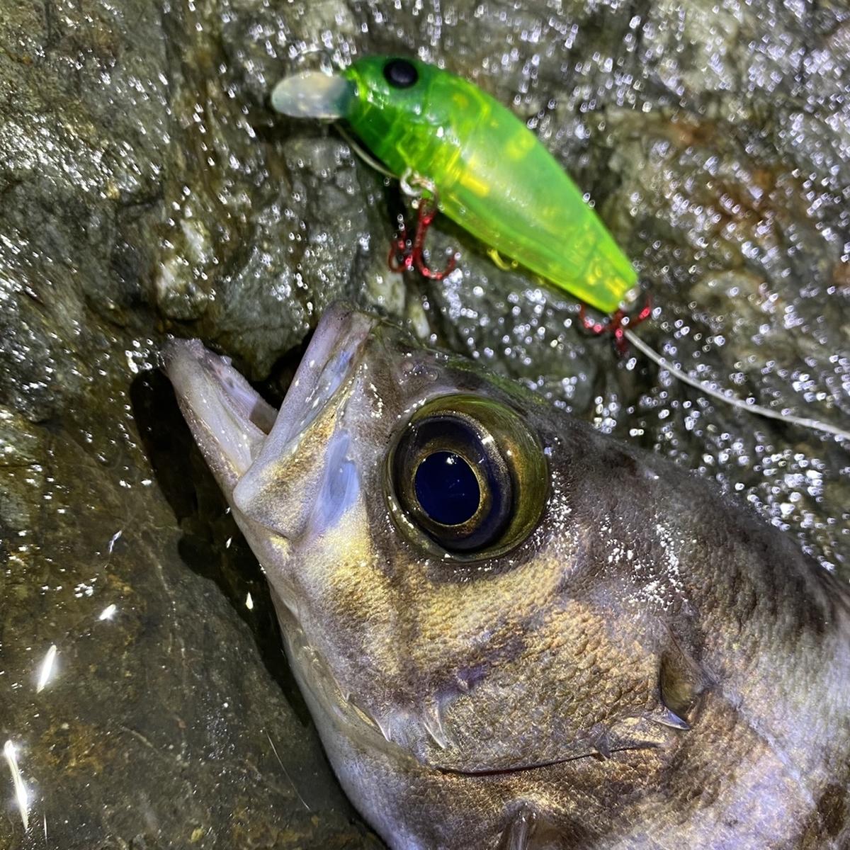 f:id:yu-kin-fishing:20210114123919j:plain
