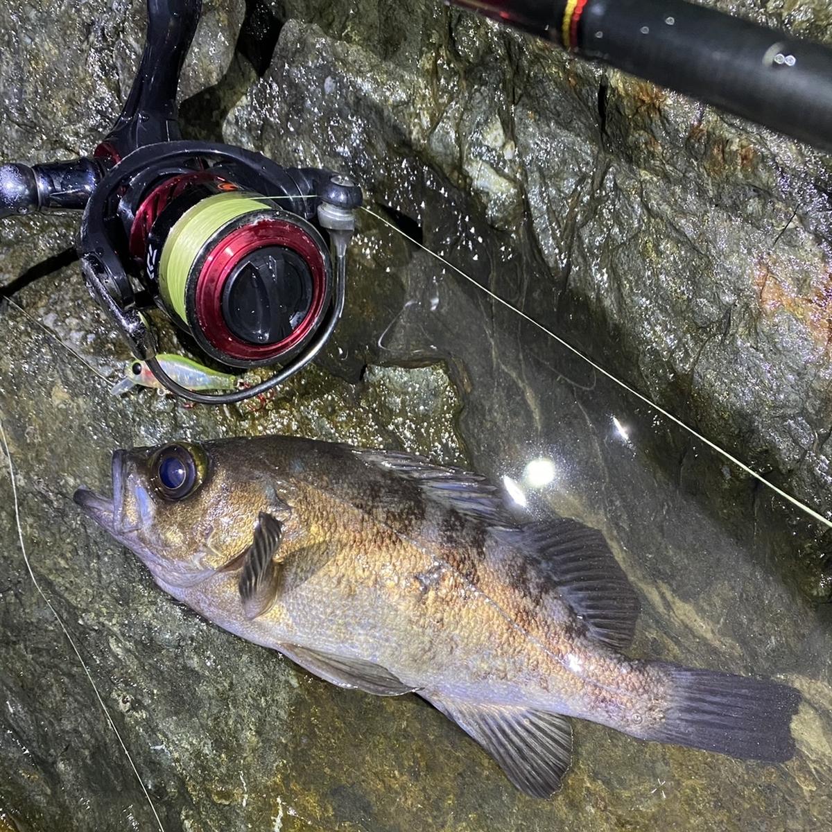 f:id:yu-kin-fishing:20210114123923j:plain