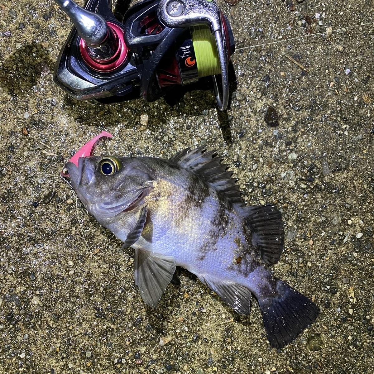 f:id:yu-kin-fishing:20210117112751j:plain