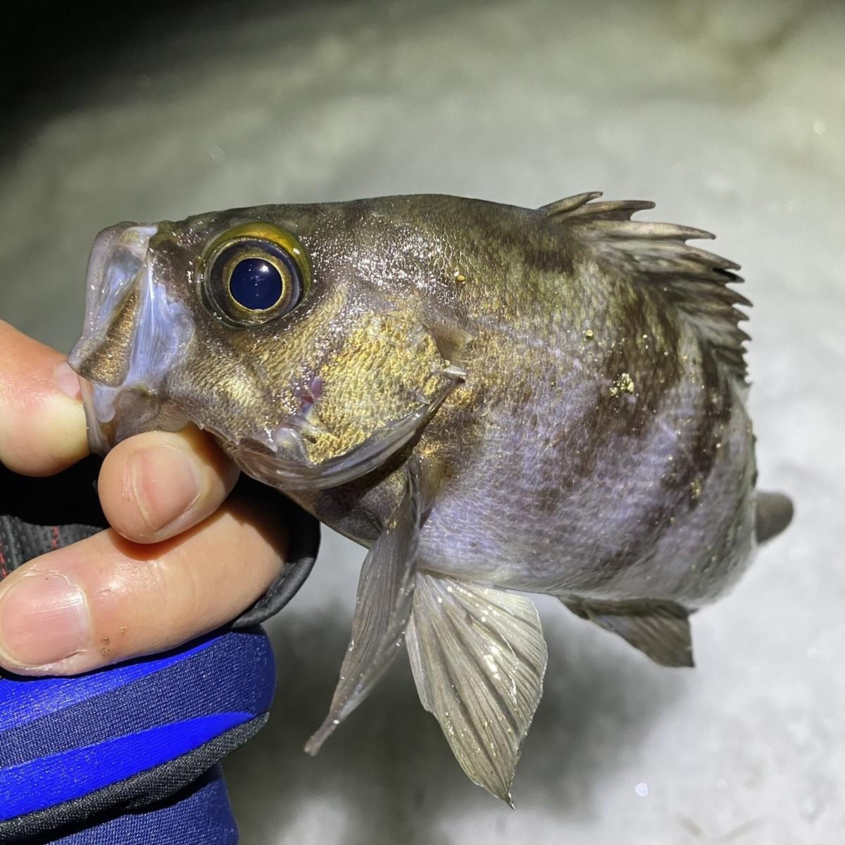 f:id:yu-kin-fishing:20210117112757j:plain