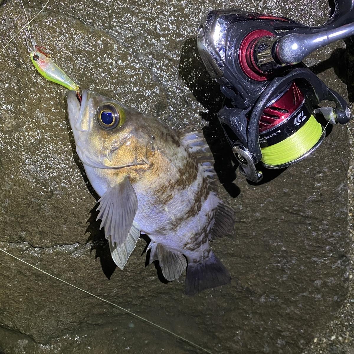 f:id:yu-kin-fishing:20210127083349j:plain