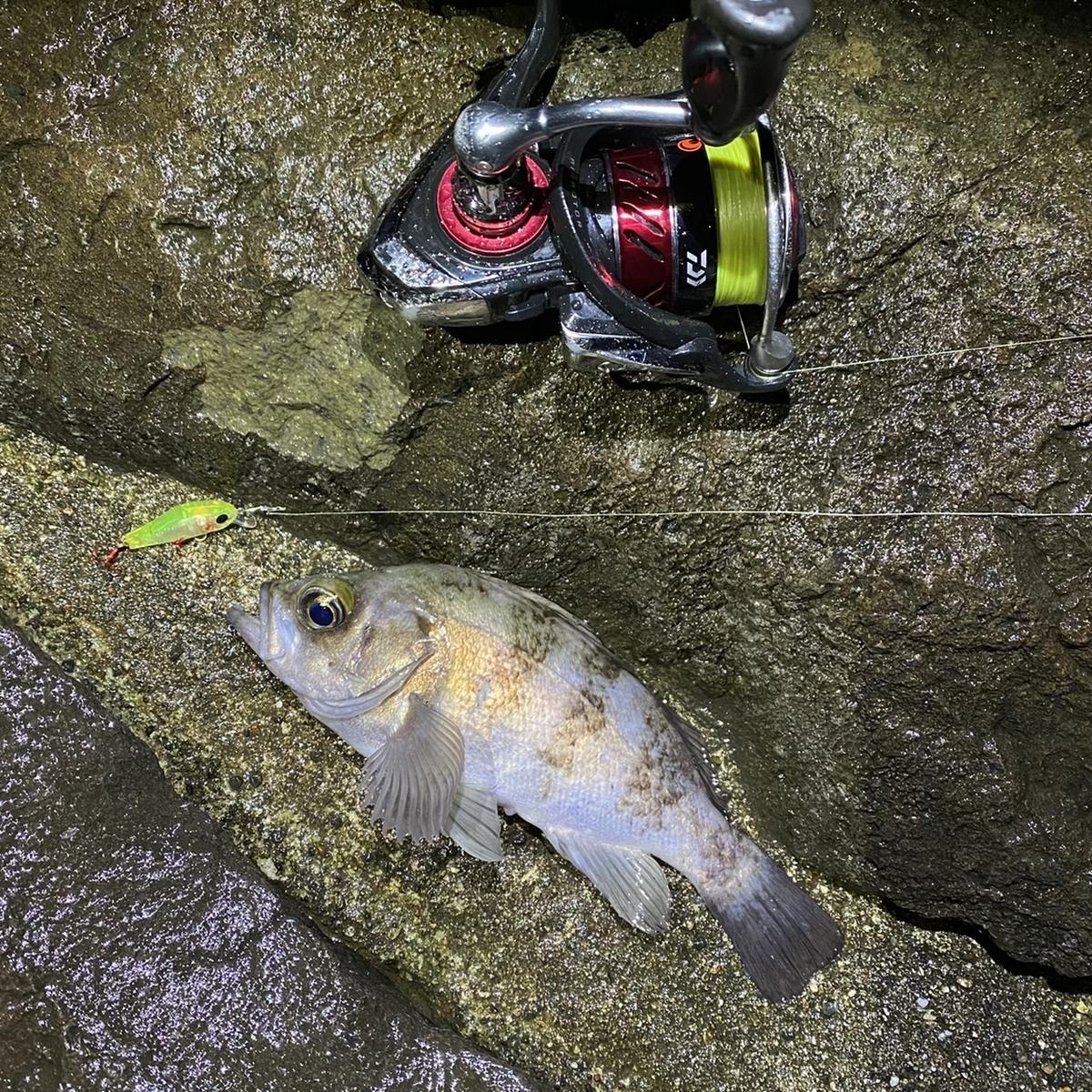 f:id:yu-kin-fishing:20210127083400j:plain