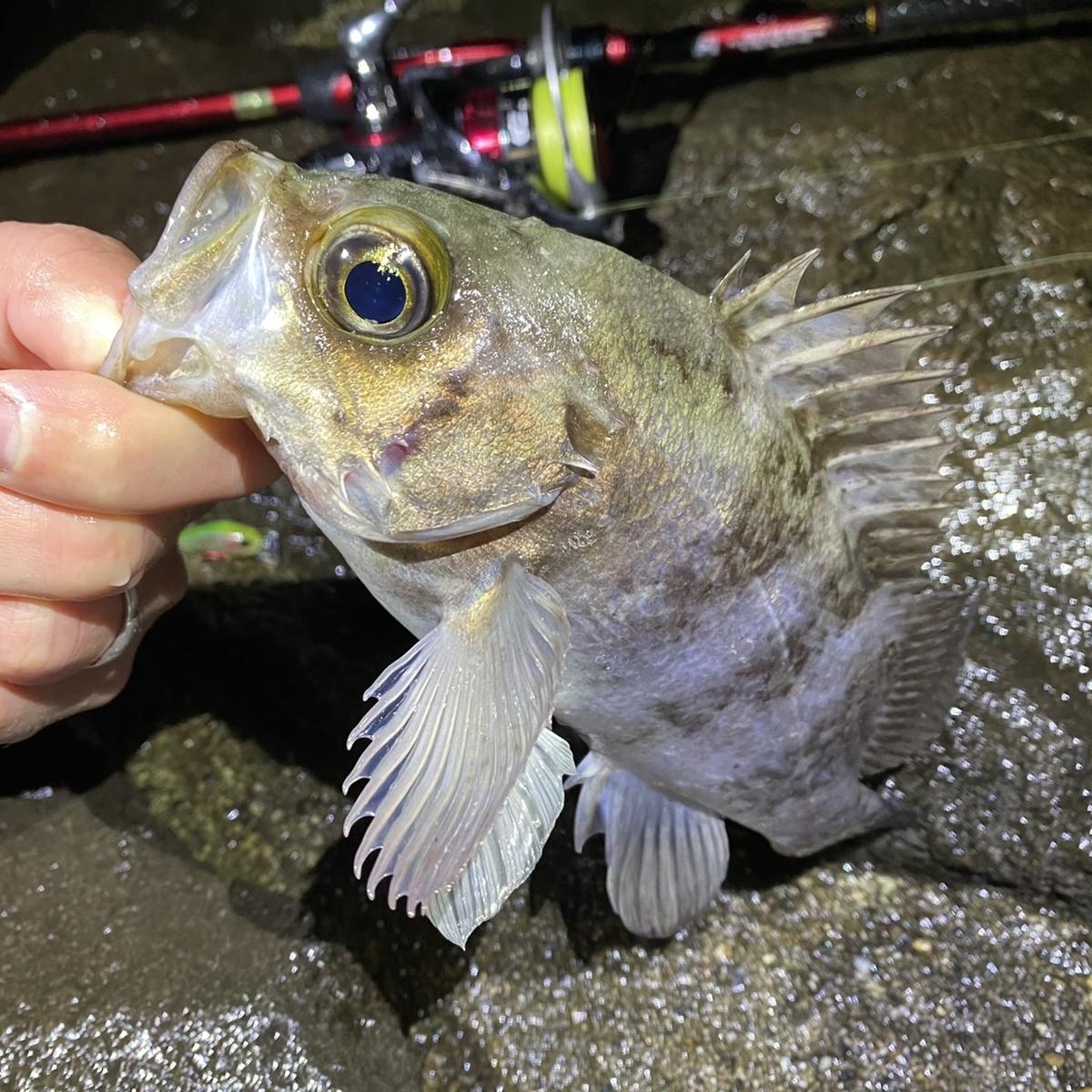 f:id:yu-kin-fishing:20210127083406j:plain