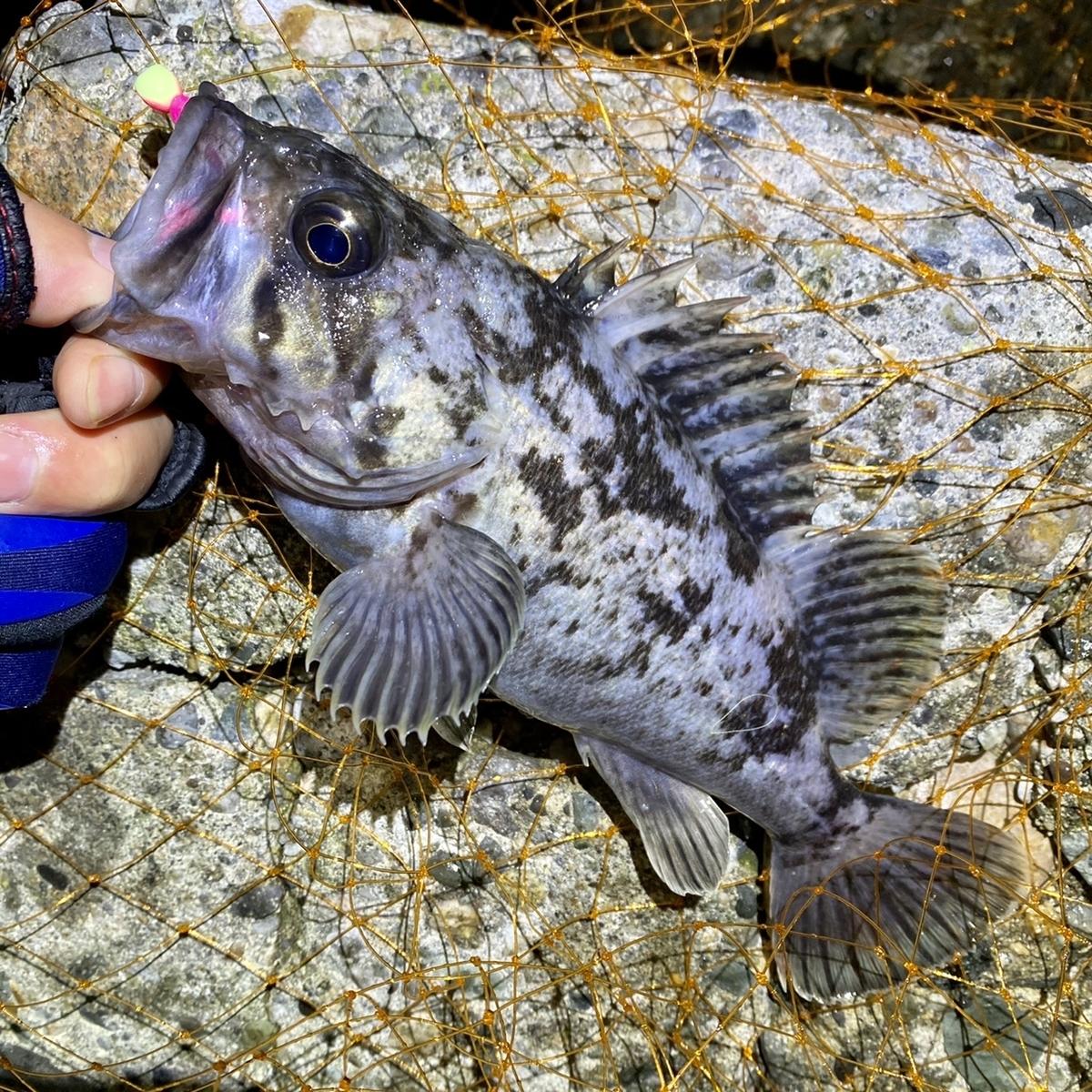 f:id:yu-kin-fishing:20210129081926j:plain