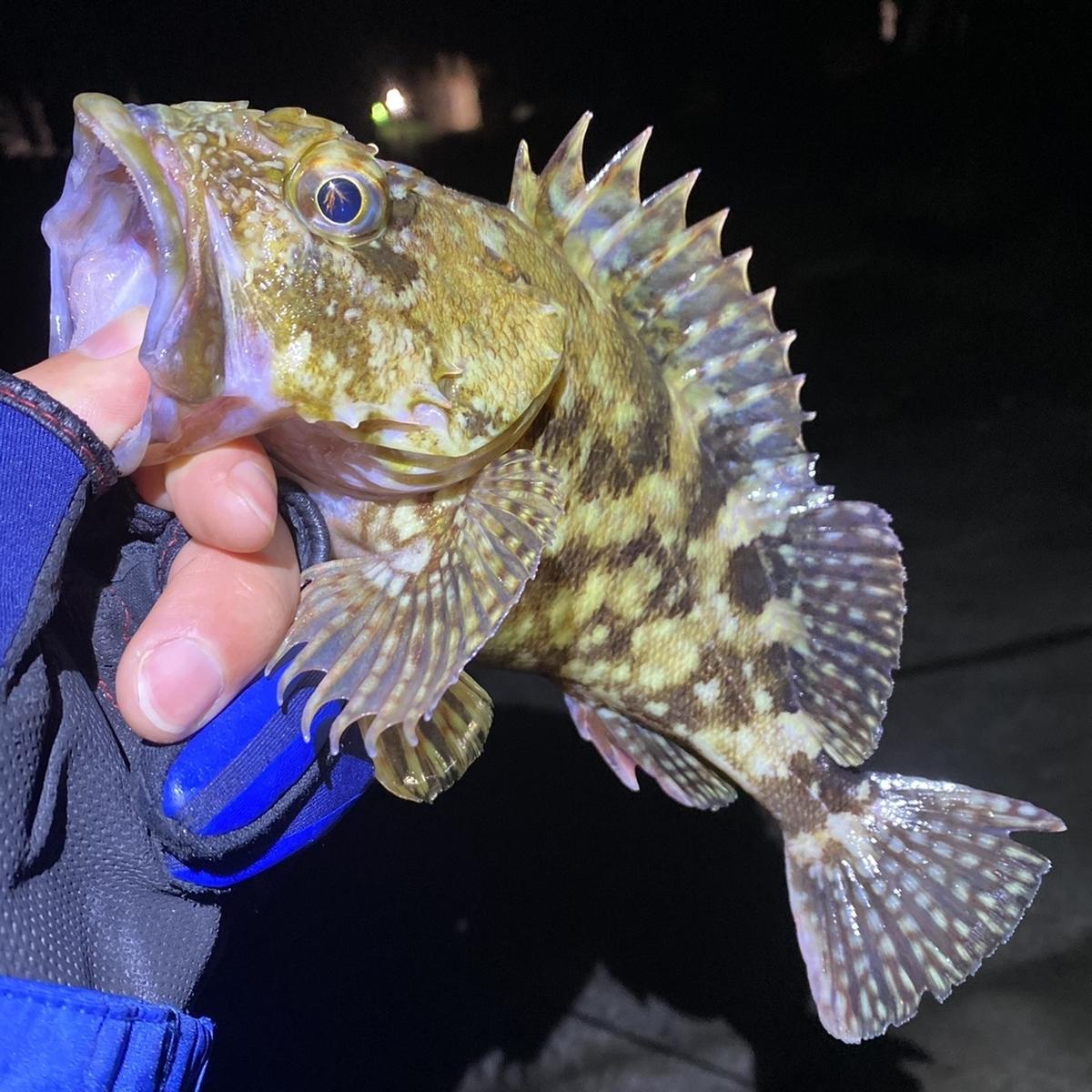f:id:yu-kin-fishing:20210129081946j:plain