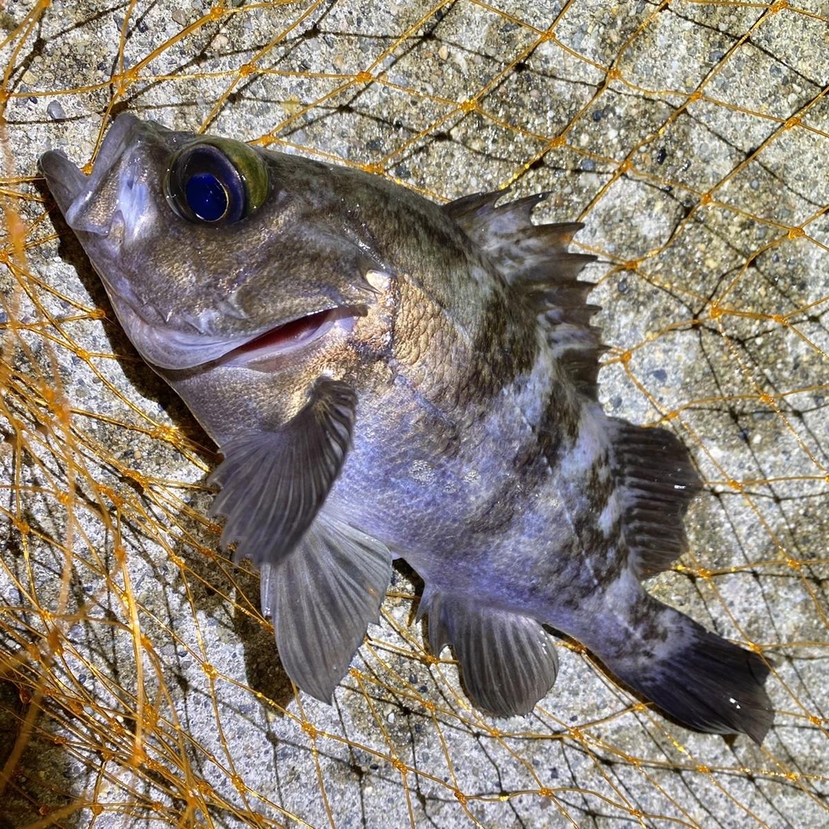 f:id:yu-kin-fishing:20210129081951j:plain