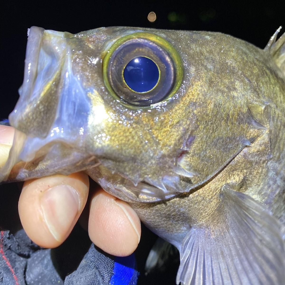 f:id:yu-kin-fishing:20210129081956j:plain