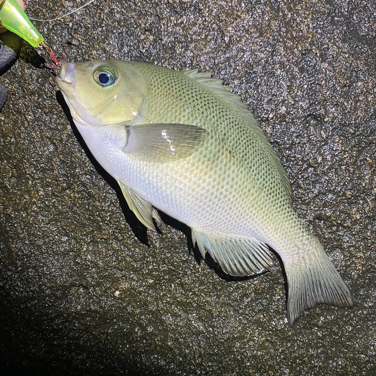 f:id:yu-kin-fishing:20210212154254j:plain