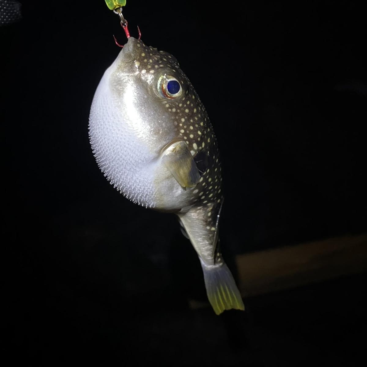 f:id:yu-kin-fishing:20210212154310j:plain