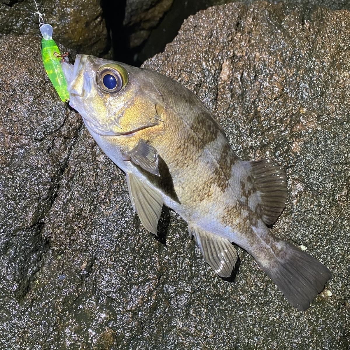 f:id:yu-kin-fishing:20210212154329j:plain