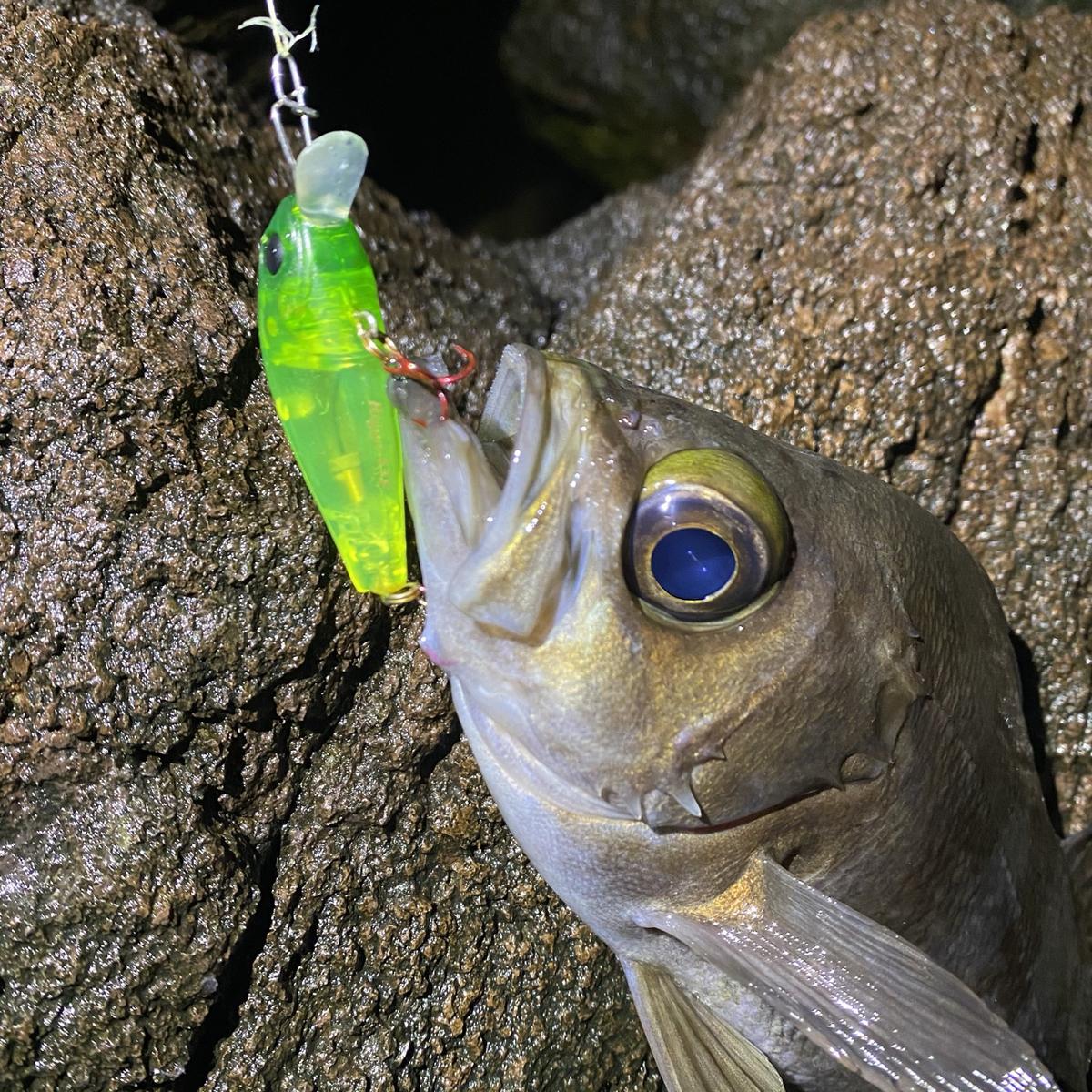 f:id:yu-kin-fishing:20210212154334j:plain