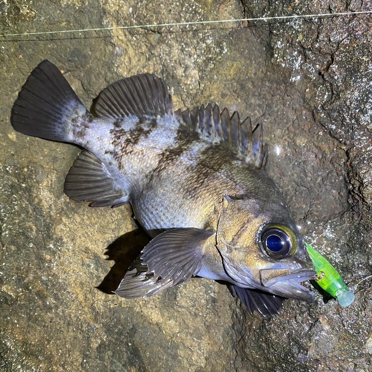 f:id:yu-kin-fishing:20210212154343j:plain