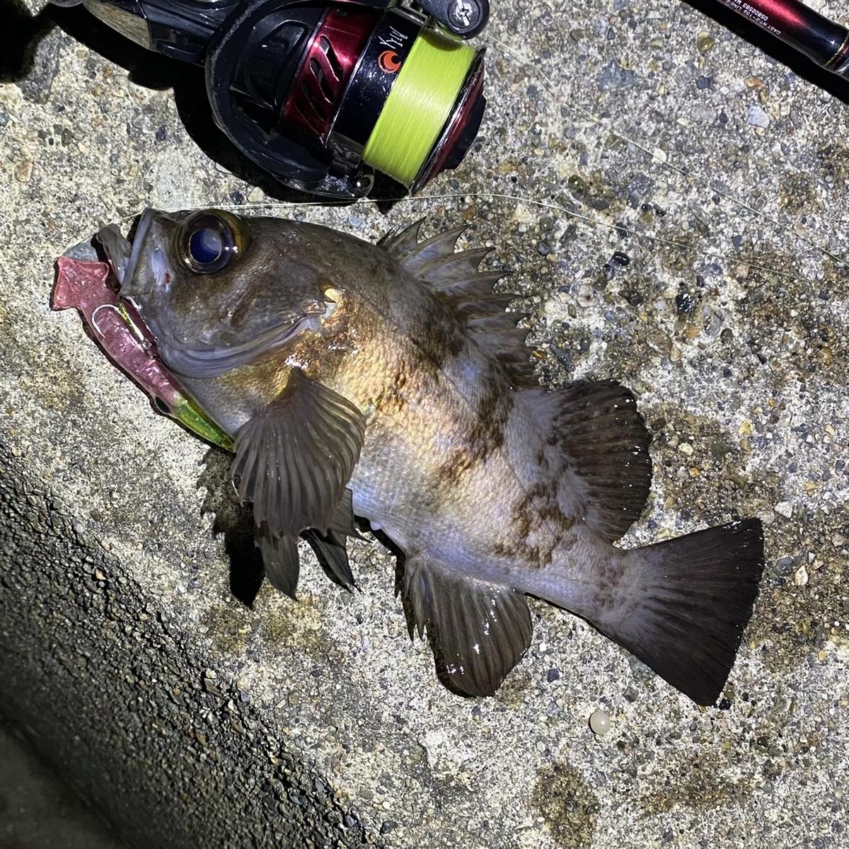 f:id:yu-kin-fishing:20210215130739j:plain