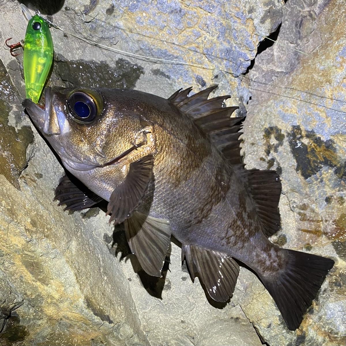 f:id:yu-kin-fishing:20210215130749j:plain