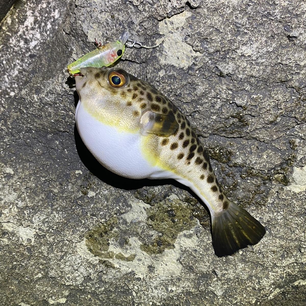 f:id:yu-kin-fishing:20210215130816j:plain