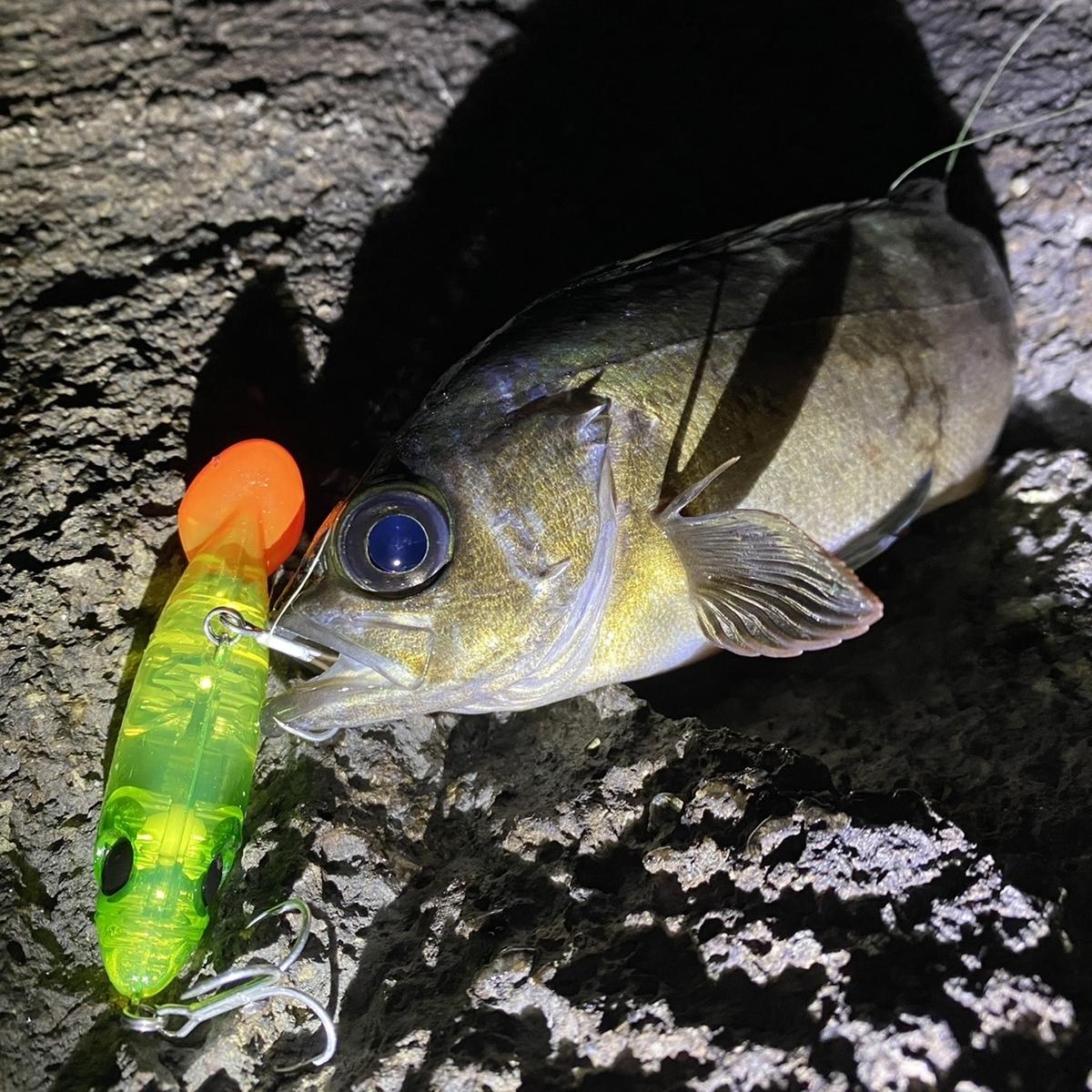 f:id:yu-kin-fishing:20210215130832j:plain