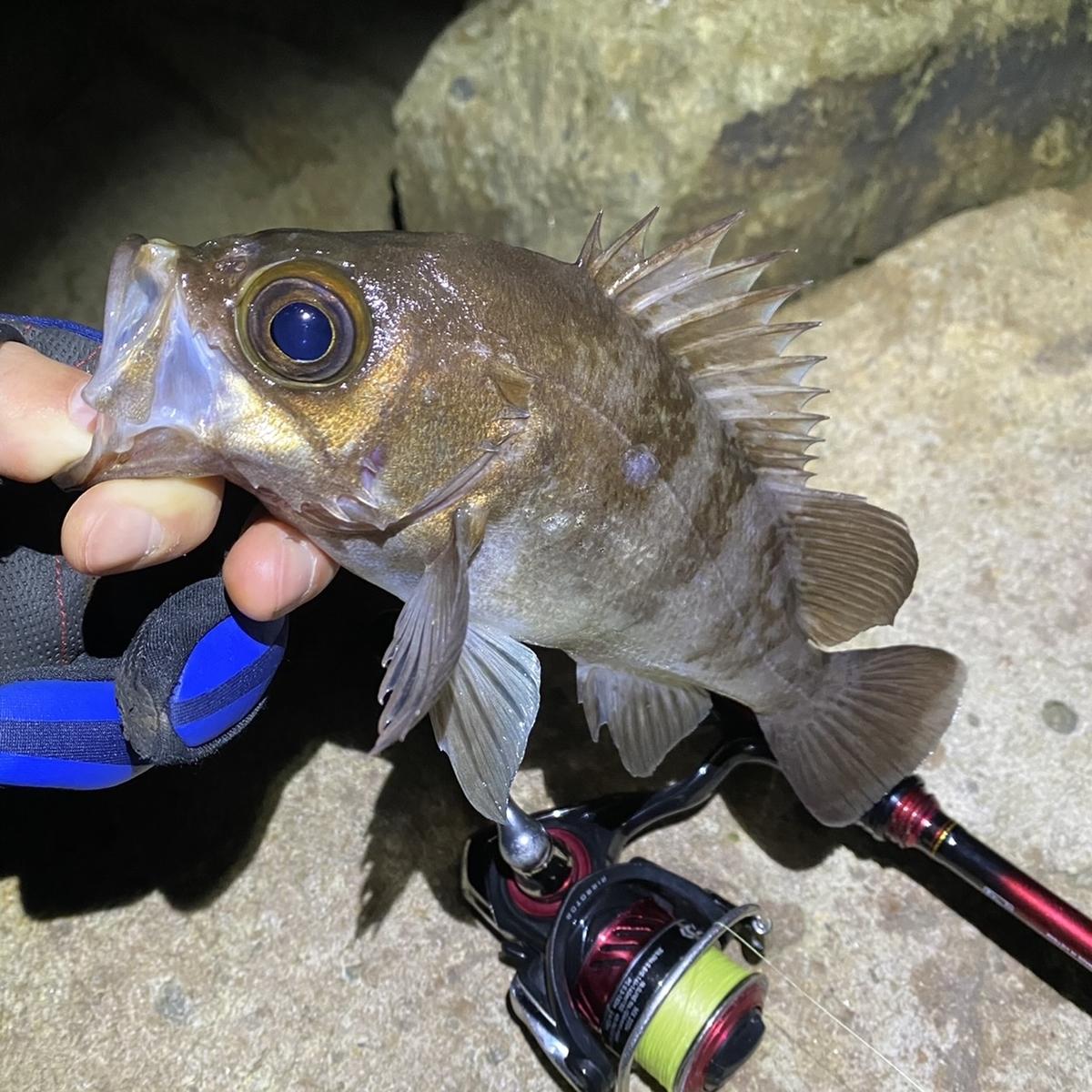 f:id:yu-kin-fishing:20210223190047j:plain