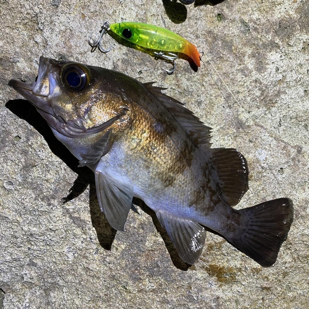 f:id:yu-kin-fishing:20210223190053j:plain
