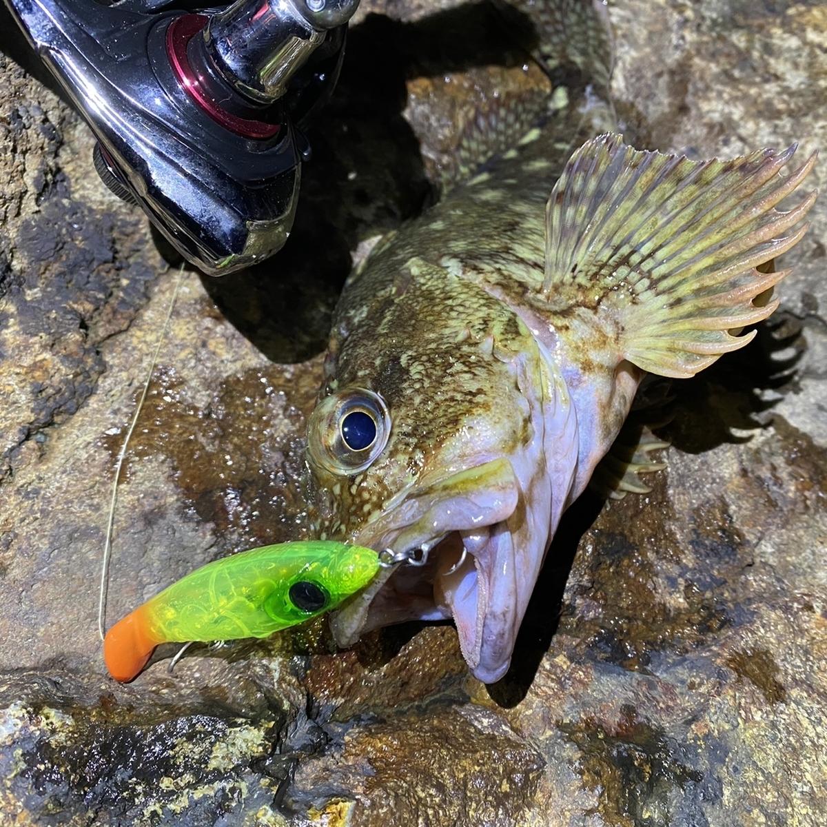 f:id:yu-kin-fishing:20210224150452j:plain