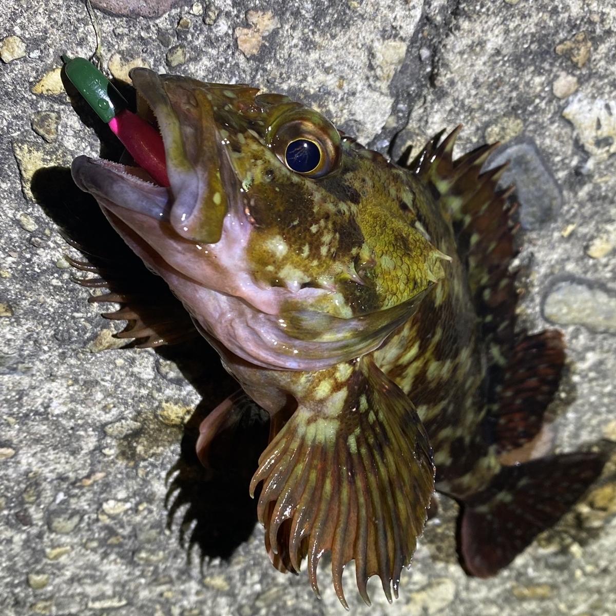 f:id:yu-kin-fishing:20210305105333j:plain