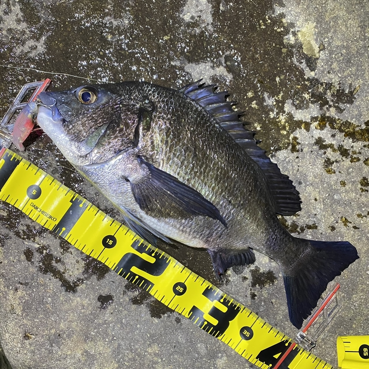 f:id:yu-kin-fishing:20210313104332j:plain