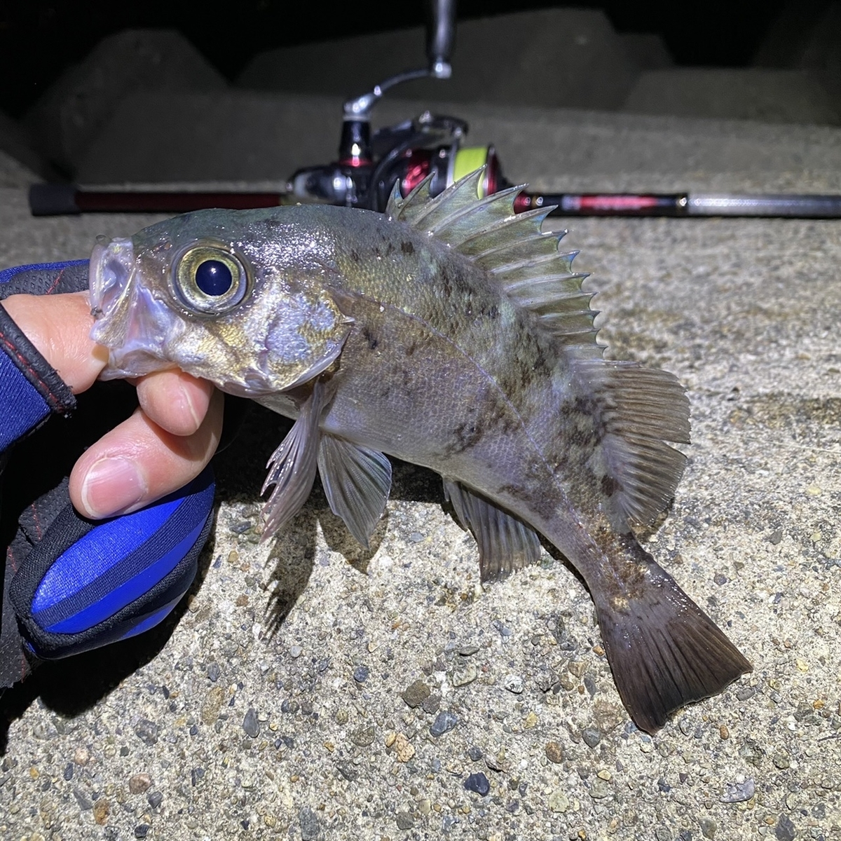 f:id:yu-kin-fishing:20210316094624j:plain