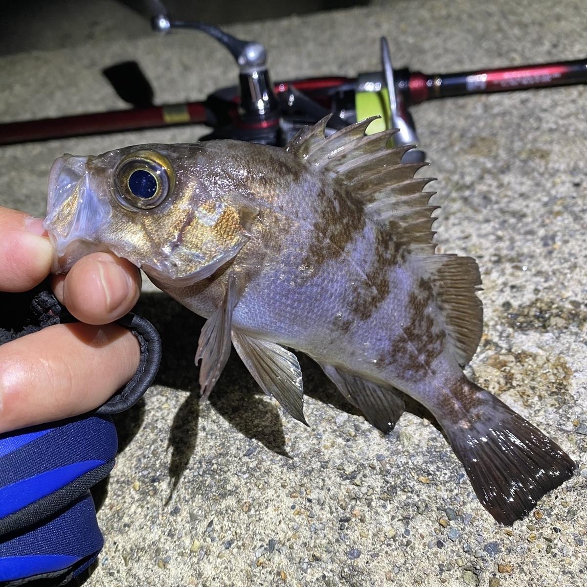 f:id:yu-kin-fishing:20210316094641j:plain