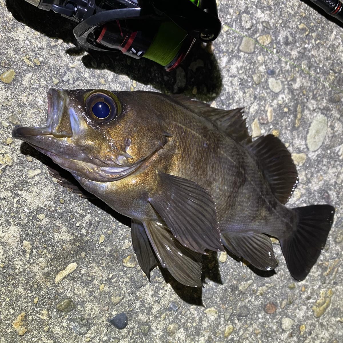 f:id:yu-kin-fishing:20210324155417j:plain