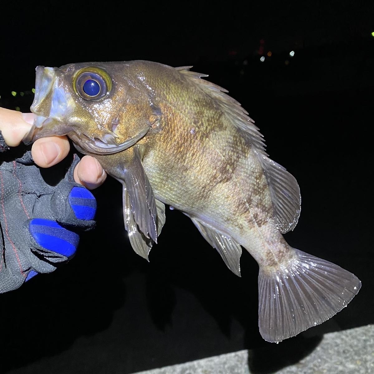 f:id:yu-kin-fishing:20210324155457j:plain