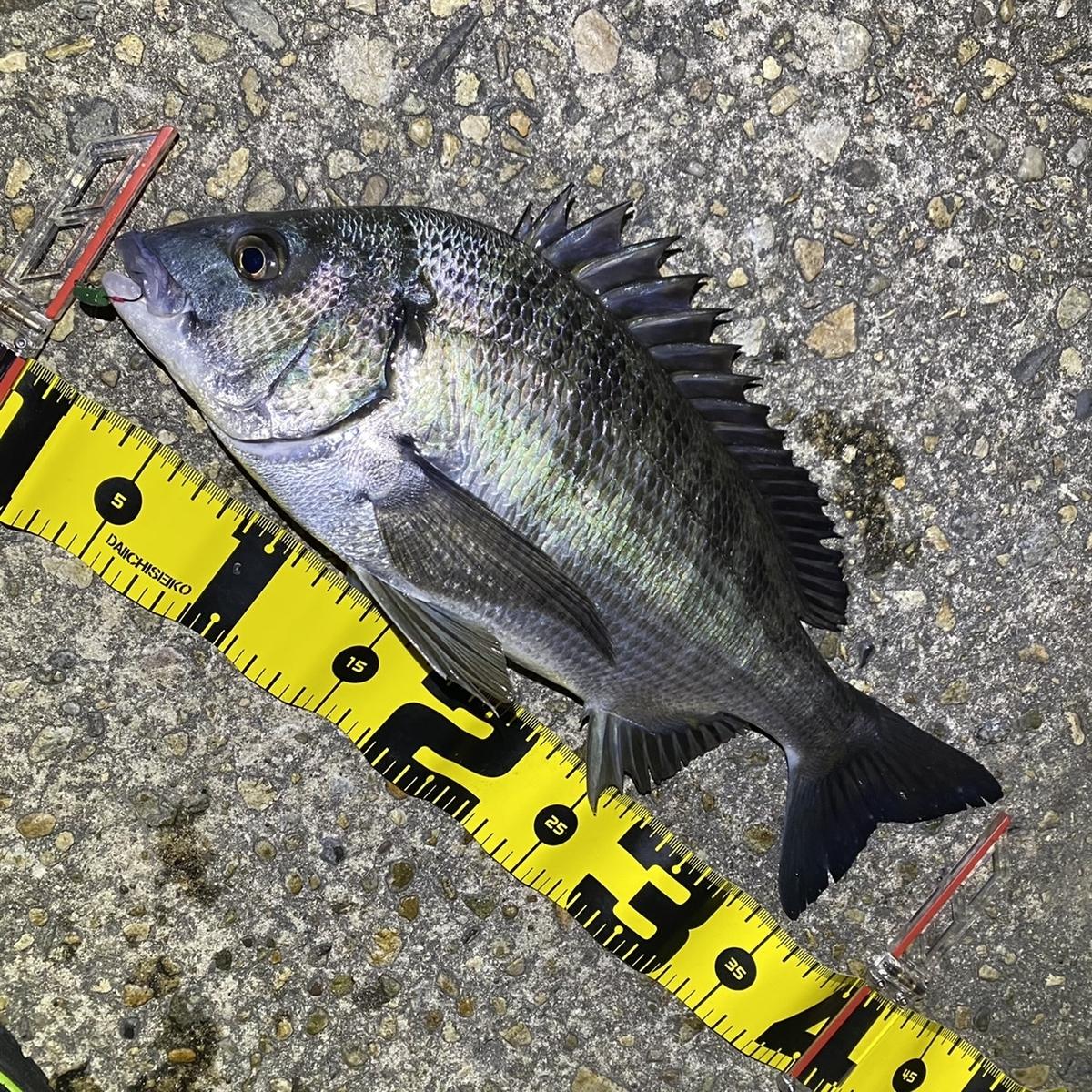 f:id:yu-kin-fishing:20210324155520j:plain