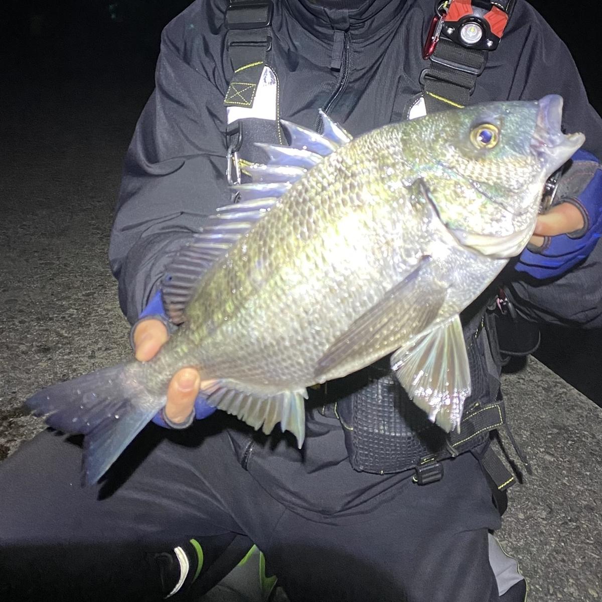 f:id:yu-kin-fishing:20210324155525j:plain