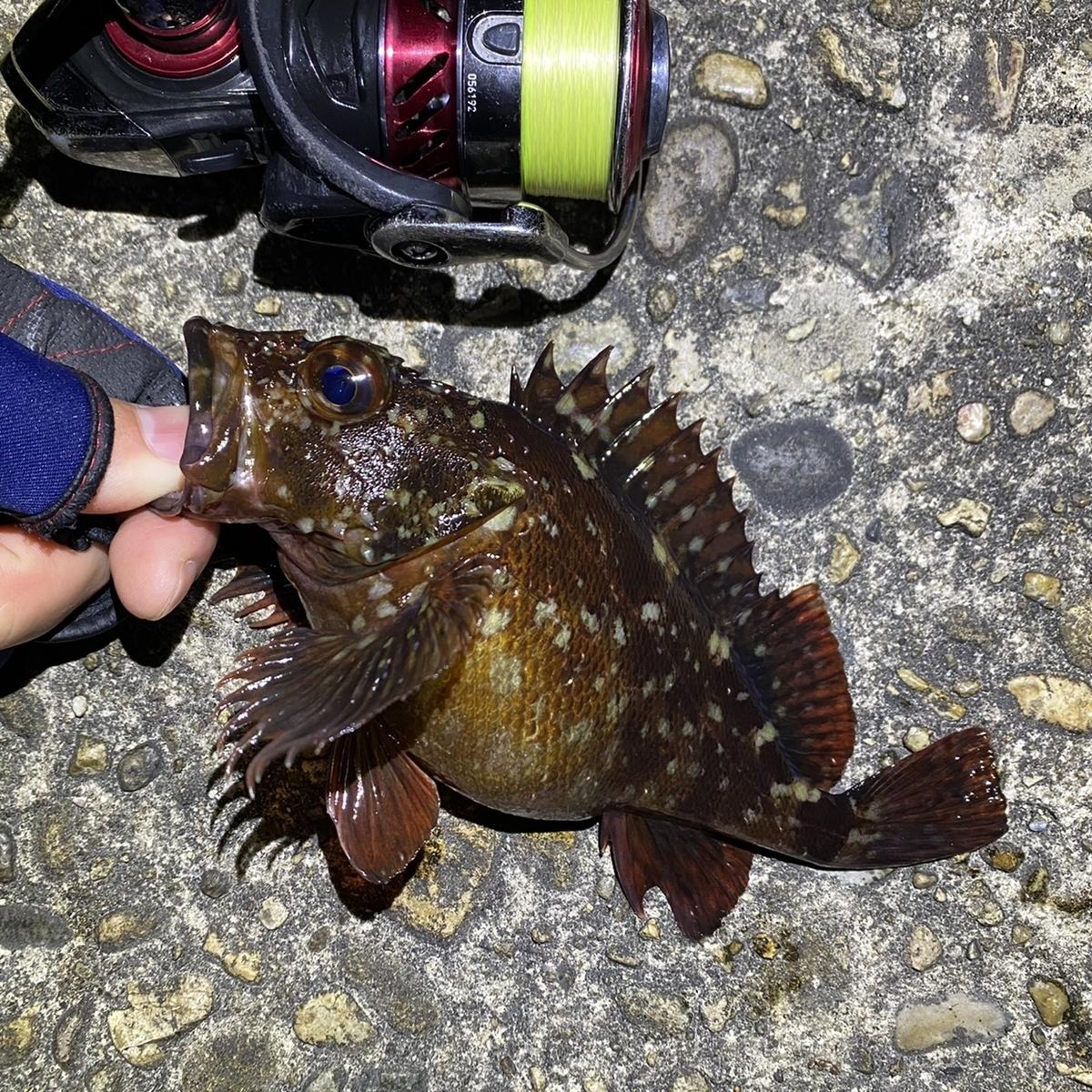 f:id:yu-kin-fishing:20210329114905j:plain