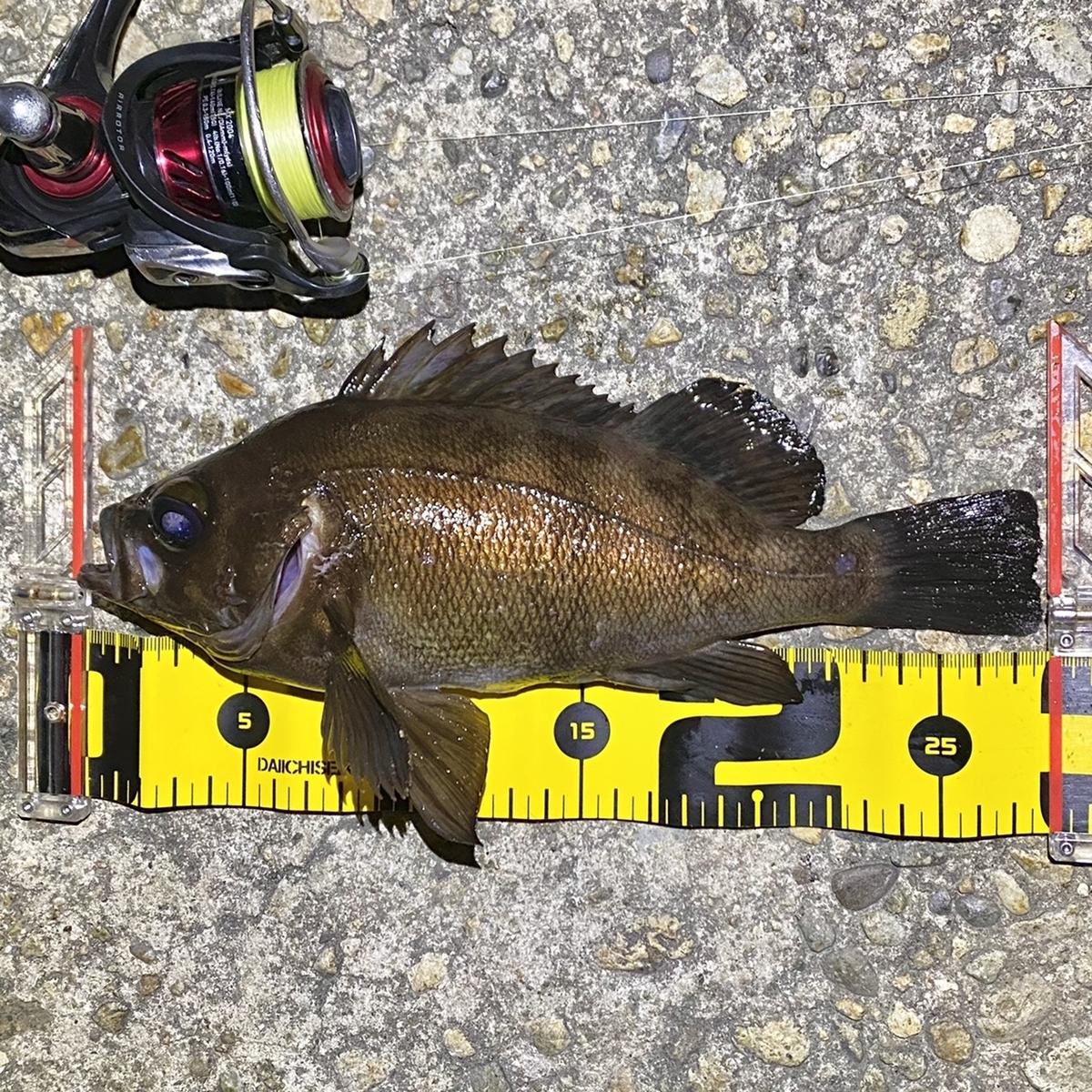 f:id:yu-kin-fishing:20210401141336j:plain